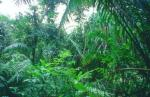 tropical-rainforest_BR
